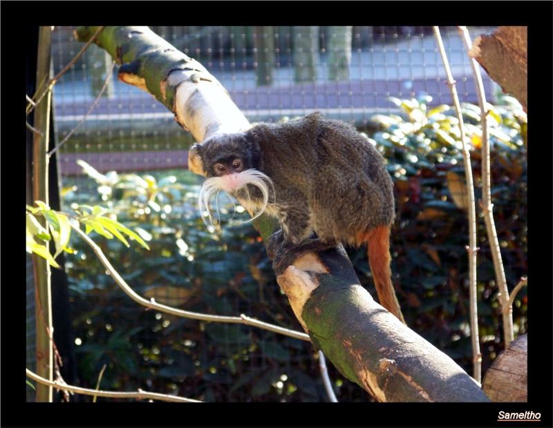 zoo_le15.jpg