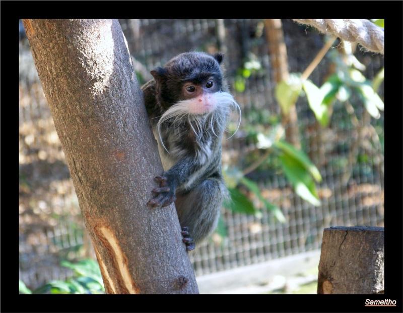 zoo_le16.jpg