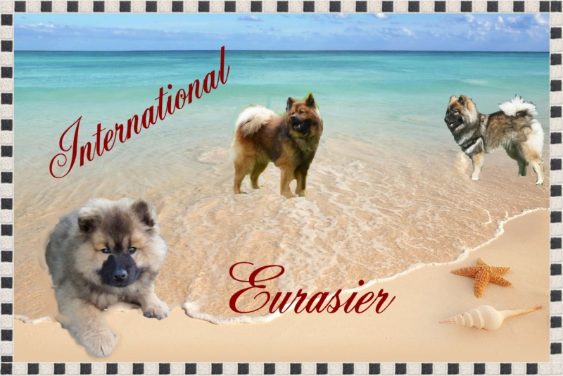 Forum International Eurasier