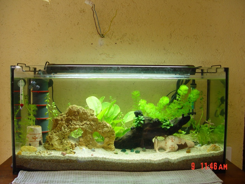 bac 20l et 96l install s et mis en eau forum aquarium. Black Bedroom Furniture Sets. Home Design Ideas