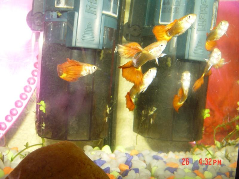 Bac 20l et 96l install s et mis en eau forum aquarium - Aquarium changer l eau ...