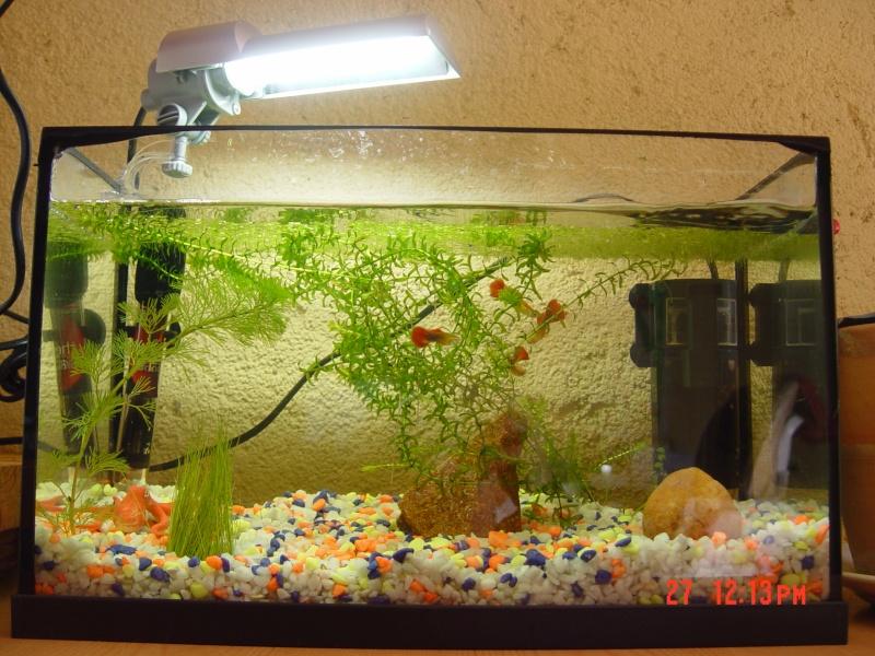 Bac 20l et 96l install s et mis en eau forum aquarium for Aquarium ouvert