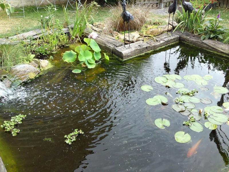 Bassins poissons rouges et ko s - Bassin poisson cascade creteil ...