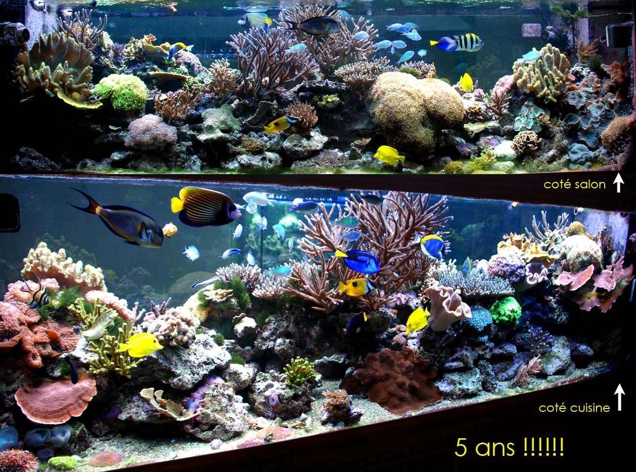 Evolution d 39 un bac marin il entame la 10eme ann e for Bac a poisson 500l