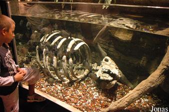 décoration aquarium squelette
