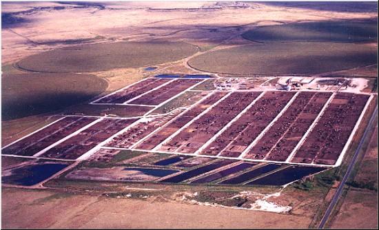 Sistema intensivo de producción de Carne Bovina, alimentando a Corral