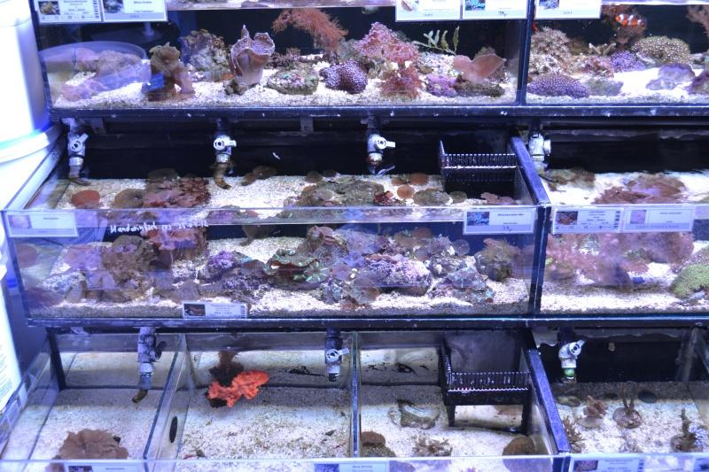 recifal-france • Ptite visite magasin Kolle zoo côté eau ...