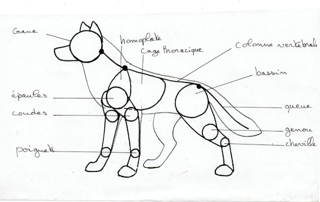 Comment dessiner des loups - Un loup dessin ...