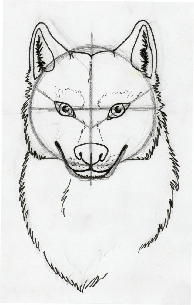 Tuto comment dessiner un loup 2 - Tete de loup dessin ...