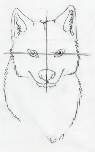 Tuto comment dessiner un loup 2 page 1 - Un loup dessin ...