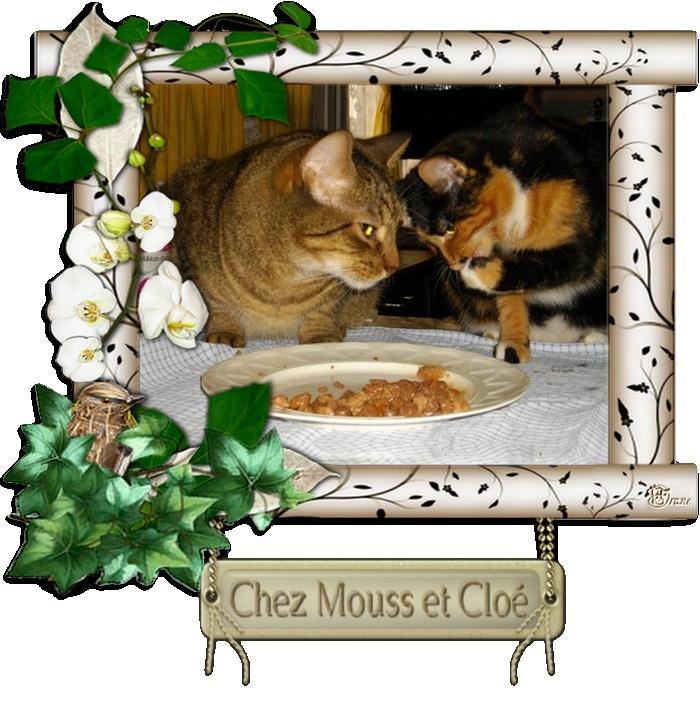 Chez Mouss et Cloé