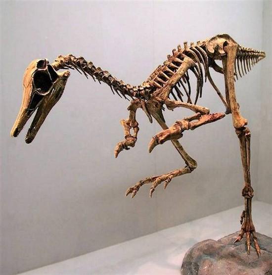 zoologie espèce disparue forum dinosaure nouveau mono-griffe chine Linhenykus monodactylus paléontologie Alvarezsauridae gros perroquet Wulansuhai Mongolie intérieure Tyrannosaure T-rex Vélociraptor