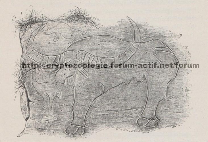 culture et publications philatélie timbre buffle bovidé préhistorique disparu Bubalus antiquus dessin rupestre forum paléontologie algérie bubale pomel kabylie