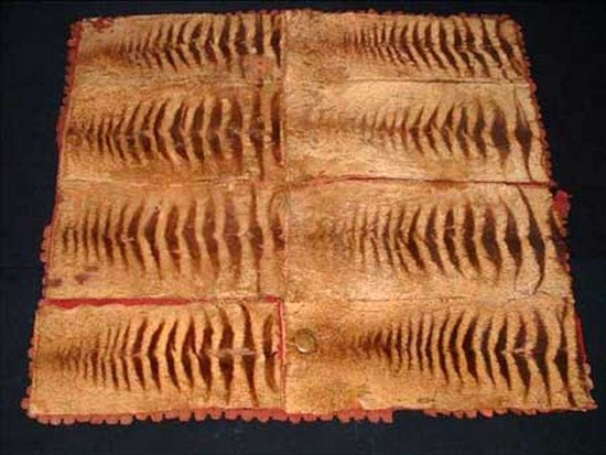 Cryptozoology tassie tiger thylacine tapis peau loup marsupial tasmanian tiger forum espèce disparue esposition tasmanian museum Cryptozoologie