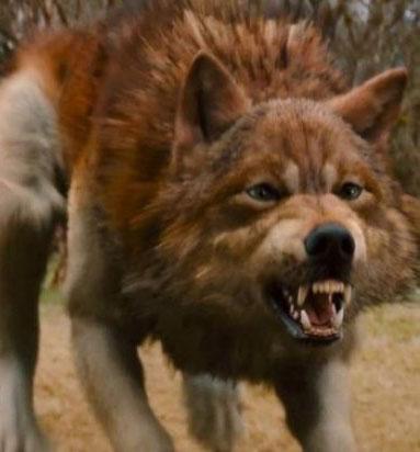 Les Loup Garou