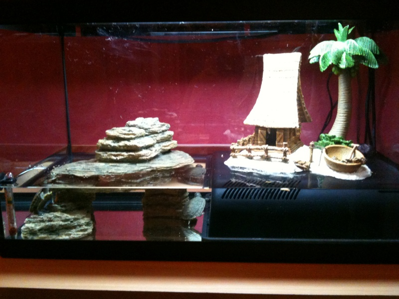 Mon aquarium pour mes tortue for Aquarium tortue