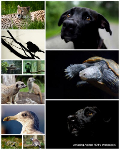 18 Amazing Animal HDTV Wallpapers