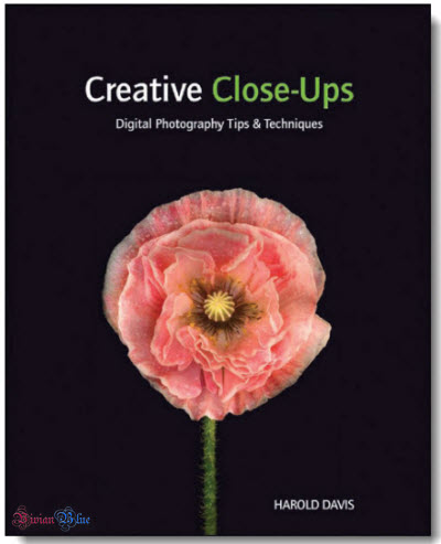Photography Tips on Creative Close Ups  Digital Photography Tips And Techniques