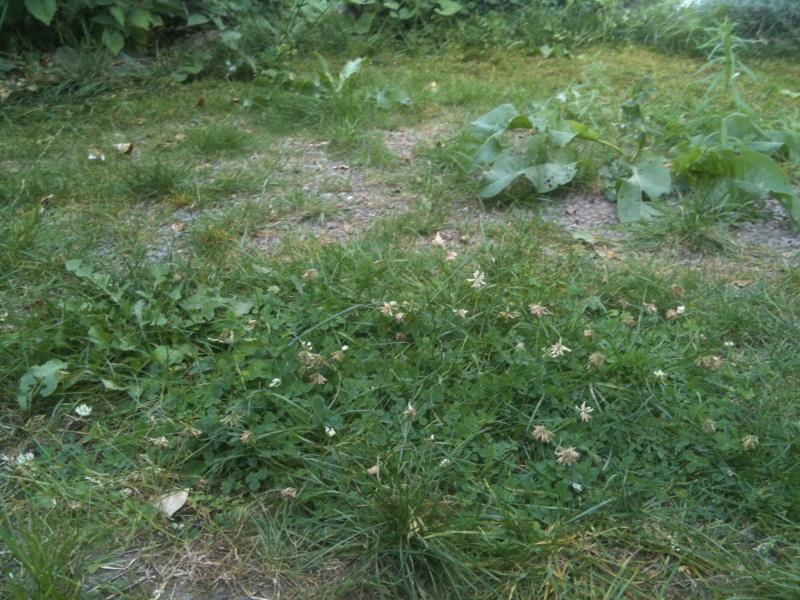 Je suis la recherche d 39 une eurotestudo boettgerie page 2 - Arrache mauvaise herbe ...