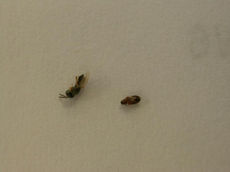 Quoi faire contre minuscules fourmis - Que faire contre les fourmis ...