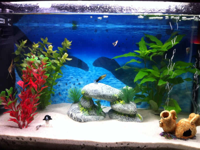 decoration pour aquarium eau douce