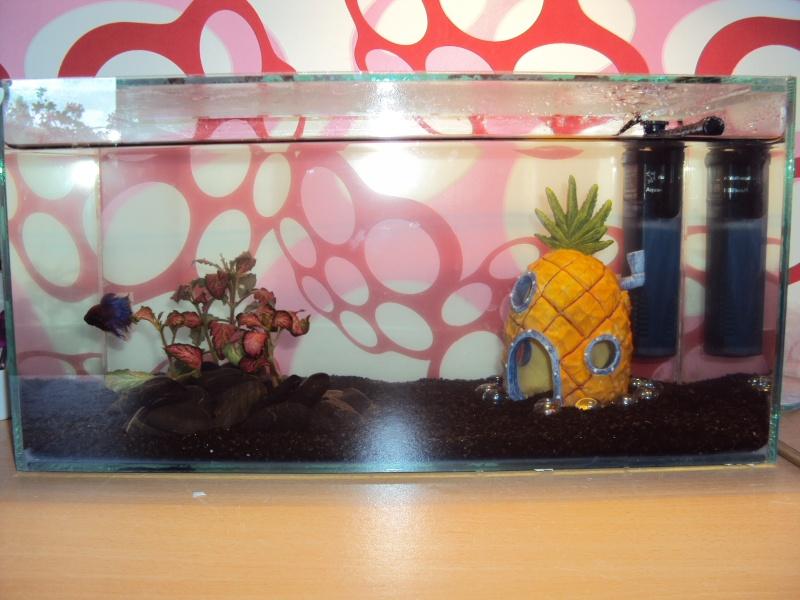 décoration pour aquarium bob l eponge