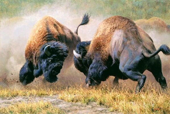 buffal12.jpg